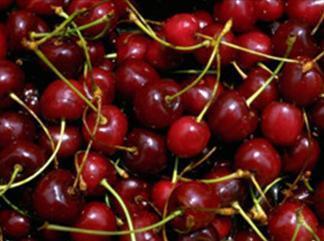 Menù della sagra delle ciliegie di Giarre